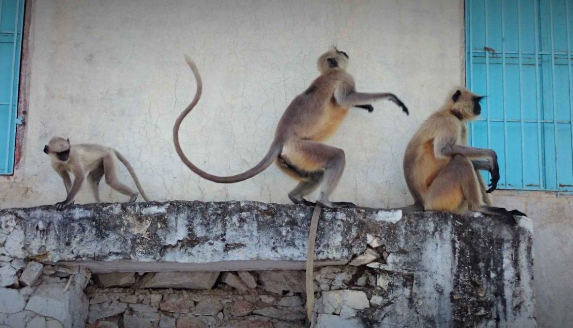 India Gallery #2: Rattin' Round Rajasthan – Leg 2